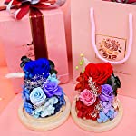 king doo eternal rose 3 heads preserved real rose immortal flowers in glass dome, for teachers day, birthday, wedding, parties and christmas