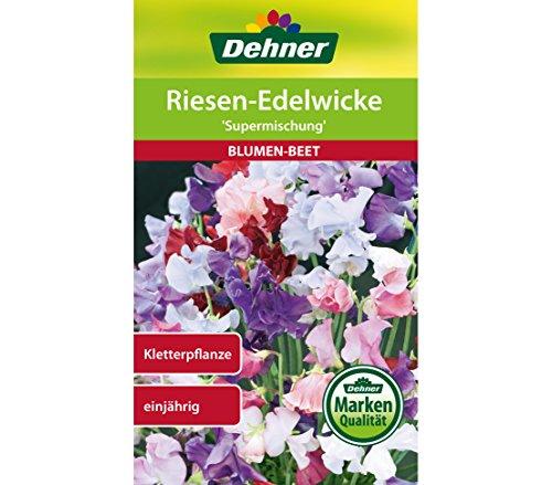 Dehner Blumen-Saatgut, Riesen-Edelwicke,