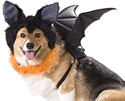 Halloween costumes dog dragon wings