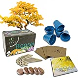 Bonsai Tree Seed Starter Kit - Complete Growing Kit - Grow 5 Bonsai Tree Live Indoor Plant from Seed - Adult Crafts - Grow Your Own Live Plant - Great DIY kits for adults - Crafts for adults