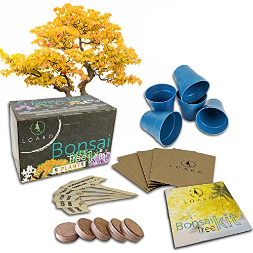 Bonsai Tree Seed Starter Kit - Complete Growing Kit - Grow 5 Bonsai Tree Live Indoor from Seed - Indoor Garden - Grow Your Own Live Plant - Great Gardening Gifts Idea for Fathers - Indoor Plant Seeds