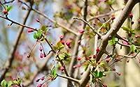 大人の子供のための500ピースのジグソーパズル桃の花が咲く場所すべてのピースはユニークで、ピースは完璧にフィットします
