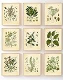 Ink Inc. Set mit 9 Kräutern botanischen Drucken,