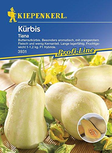 Kiepenkerl Butternut-Kürbis 'Tiana' | wenig Kerne | lange lagerbar | 1 Packung Samen