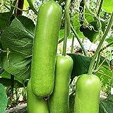 Semillas de hortalizas, 100 piezas / bolsa Semillas Verde claro No OGM Fácil de plantar Excelente producción de semillas de plantas para jardín