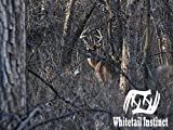 Ground Hunting Near Buck Bedding Areas