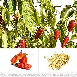 Pepperworld Aji Peruvian Chili-Saatgut, 10 Korn, Chili-Schote zum Anpflanzen, sehr scharf