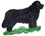 Amazing Custom Dog Portraits [Newfoundland ] Embroidery Iron On/Sew patch [4.5' x 4.2'][Made in USA]