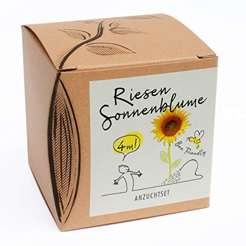 Geschenk-Anzuchtset Riesensonnenblume