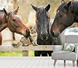 Vlies Tapete XXL Poster Fototapete Pferde Katzen Freunde Farbe color, Größe 140 x 100 cm