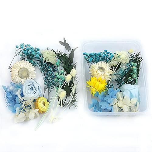 Migimi Flores secas, juego de flores secas naturales, para resina epoxi y para joyas de resina para manualidades y decoración del hogar, para manualidades, decoración de resina, tarjetas de scrapbook