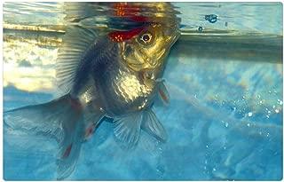 Tree26 Indoor Floor Rug/Mat (23.6 x 15.7 Inch) - Ryukin Goldfish Fish White Aquarium Aquatic