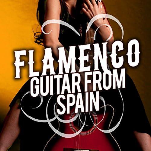 Acoustic Guitar, Guitare Flamenco & Guitarra Acústica y Guitarra Española