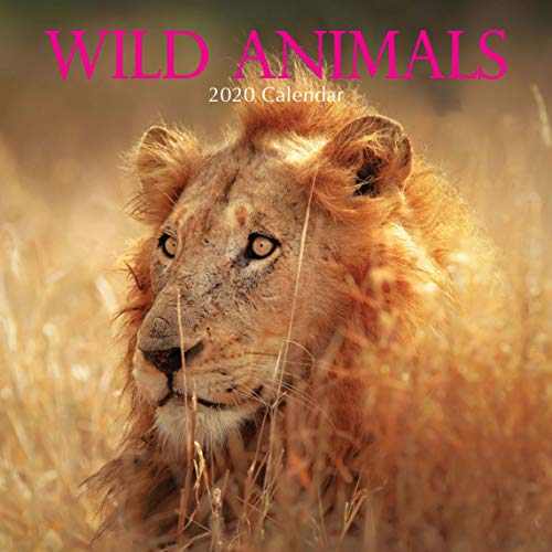 2020 Wall Calendar - Wild Animals, 12 x 12 Inch Monthly View, 16-Month, Includes 180 Reminder Stickers
