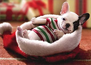 Puppy Sitting In Santa Hat - Avanti Dog Box of 10 Christmas Cards