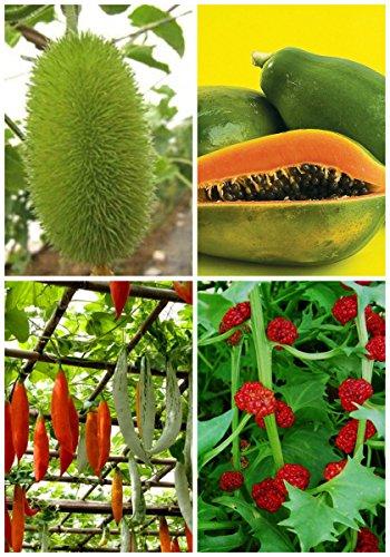 Haute-nutrition douce 4 sortes de fruits bio délicieux semences pour jardin Planttin Bonsai 3