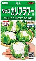 サカタのタネ 実咲野菜2403 早どりカリフラワー(白) 美星 00922403