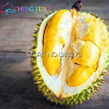 planting durian seeds