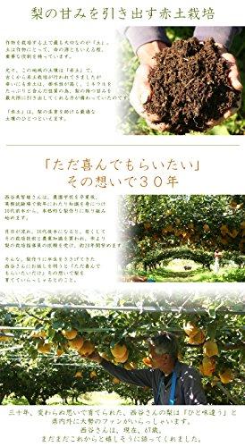 『風味絶佳.山陰 二十世紀梨(20世紀梨)7.5kg詰(22玉前後入/2L~3Lサイズ) 鳥取県産 赤秀(ご贈答用)』の1枚目の画像