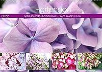 Hortensien Bezauberndes Farbenspiel (Wandkalender 2022 DIN A2 quer): Faszinierende Hydrangeas in beeindruckender Farbenvielfalt (Monatskalender, 14 Seiten )