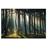 artboxONE Poster 60x40 cm Bild Wohnzimmer Natur Herbstlicht