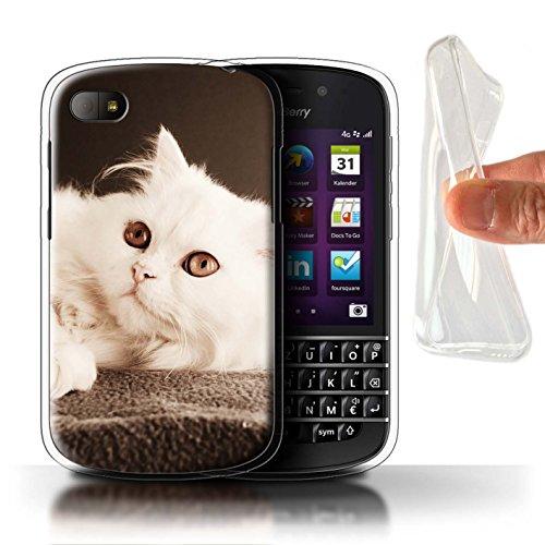 Stuff4® Custodia/Cover/Caso/Cassa Gel/TPU/Prottetiva Stampata con Il Disegno Razze Feline/Gatti Popolari per Blackberry Q10 - Gatto Persiano Pelo Lungo