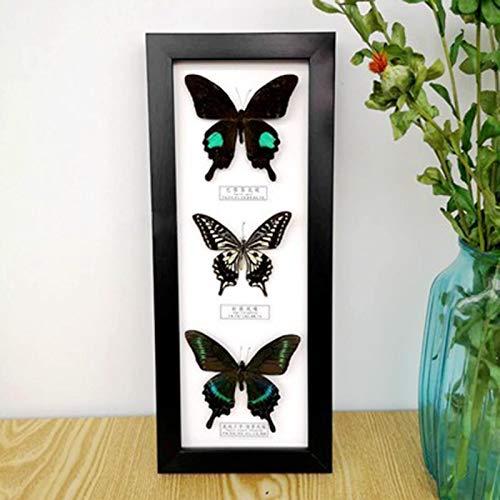 lihua Taxidermia Real montada bajo Vidrio,Especímenes de Insectos,Muestra incrustada Mariposa única,15 × 37CM Espécimen de Insecto Taxidermia