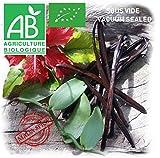 30g Vainas de vainilla organico de Madagascar qualidad Bourbon Black premium (7 a 8 vainas de 16cm a 18cm )