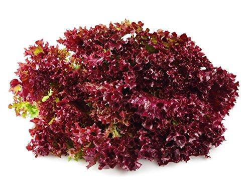 Semillas de roble Reduce Lettuce Redin - Lactuta sativa
