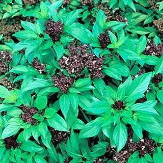 Park Seed Thai Siam Queen Basil Seeds