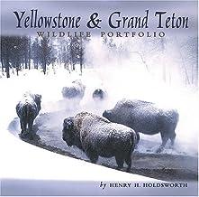 Yellowstone & Grand Teton Wildlife Portfolio