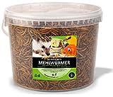 UGF - Premium Mehlwürmer getrocknet 3 Liter Eimer, Insekten Snacks für Vögel, Hamster, Igel, Nager, Eidechsen, Schildkröten – ohne Konservierungsmittel und Farbstoff
