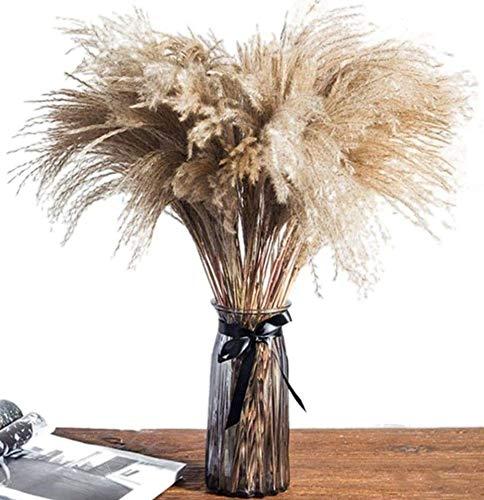 Pampas secas decoración Grandes 50cm - Contiene 50 Unidades de Plumas decoración Pampa - Flores Artificiales Decoracion jarrones largas - Ramas secas Decorativas