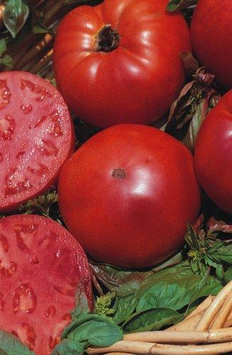 Il vous suffit de graines de tomate???Super Marmande???20?graines???Petit Jardin des paquets