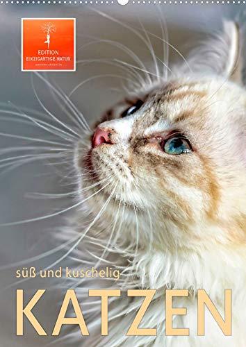 Katzen – süß und kuschelig (Wandkalender...