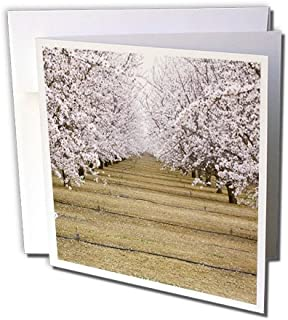 3dRose 8 x 8 x 0.25 Inches CA Agriculture Irrigation Almond Orchard Ric Ergenbright Greeting Cards, Set of 12 (gc_88593_2)
