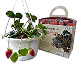 Triumph Plant Strawberry Grow kit with 3 Bare Root Plants