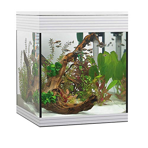 Askoll Aa350046 Aquarium Pure LED, M, weiß