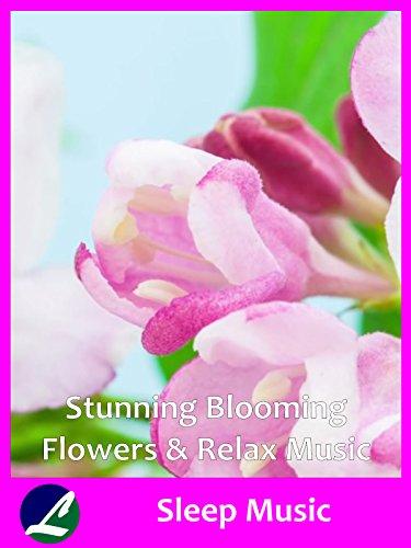 Stunning Blooming Flowers & Relax Music - Sleep Music