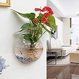 EJG 壁掛け水槽 観葉植物 アクアリウム 花瓶、壁掛け水培養植物容器 観賞魚、 は背面がミラー 23cm 植物を栽培する (添付 フィッシングネット&カラフルな小石クリスタルブロック&装飾花&釘)(Aミラー)