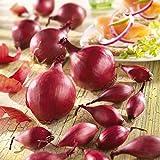 Soteer Seed House - 100 pièces Oignons BIO Oignons Rouges Graines Oignons Graines Légumes Graines Hardy Balcon/Terrasse