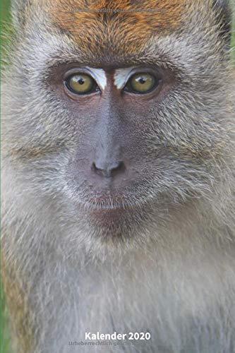 Kalender 2020 Javaneraffe: DIN A5 - 2 Seiten = eine Woche - Affe Geschenk   süße Affen   Lustige Affen