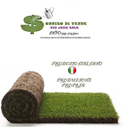 Vero prato pronto a rotoli di 25 mq 1^ scelta in erba naturale, NO sintetica sintetico (50 rotoli) per giardino