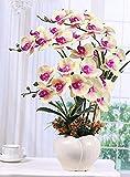 Marjon Flores Mariposa Orquídea Set Artificial Flores Mobiliario Decoración Salón Potted Plantas Amarillo