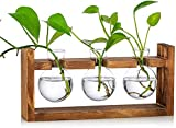Propagation Station 3 Pcs Bulb Avocado Vase Glass Acorn Vase for Flowers Terrarium Jar Planter with Wooden Rack Stand Holders for Green Water Plants Fit for Home Kitchen Table Desk Indoor Decor