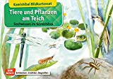 Tiere und Pflanzen am Teich. Kamishibai-Bildkartenset. Entdecken - Erzählen – Begreifen: Sachwissen. (Sachwissen für das Kamishibai)