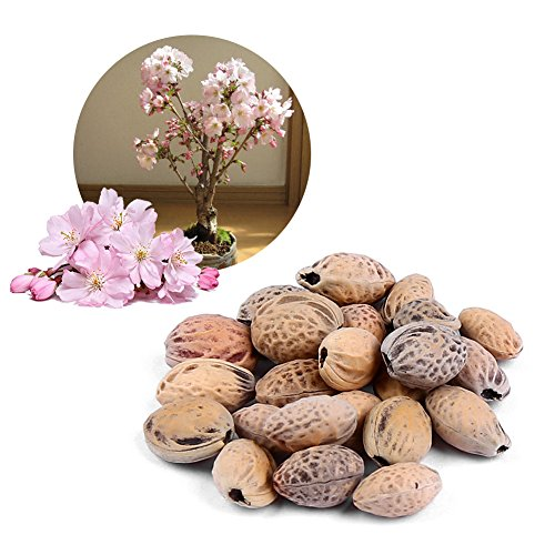 Semillas Flor Cerezo - Delaman Japonés Sakura Tree Seed Bonsai Patio Flor Planta Maceta Para Home Garden Balcony Decoration 20pcs (Color : Pink)