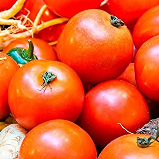 Ultra Sweet F1 Hybrid Tomato Seeds (25 Seeds)