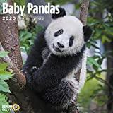 2020 Baby Pandas Wall Calendar...