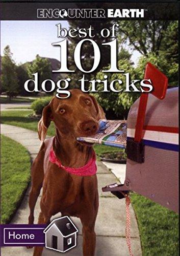 Best of 101 Dog Tricks